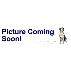 bead, swarovski crystals and stainless steel grommets, crystal passions, crystal ab, 14x9.5mm becharmed briolette with 4.5mm hole (5948). sold per pkg of 12.