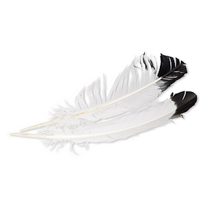 feather, eagle (imitation), black and white, 10mm wide, 14 inches. sold per pkg of 2.